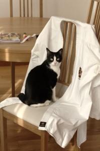 Poser la veste sur le dossier d'une chaise
